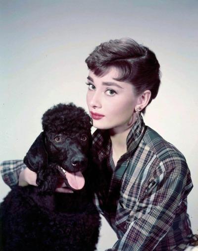 Одри Хепберн и животные: собака/ Audrey Hepburn and animals: dog. Photo