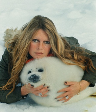 Брижит Бардо и животные (фото): белёк гренландского тюленя / Brigitte Bardot & animals (Photos): Harp Seal's cub