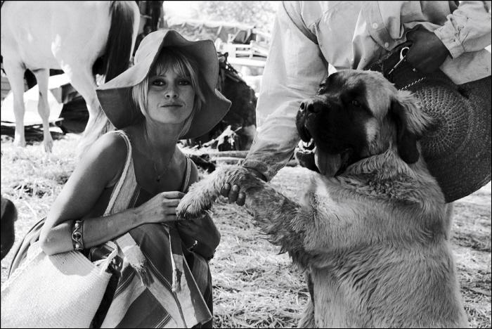 Брижит Бардо и животные (фото): собака / Brigitte Bardot & animals (Photos): dog